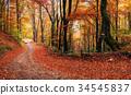 Scenic Autumn Landscape 34545837