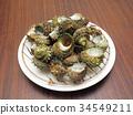 Turbo sea snail shell 34549211