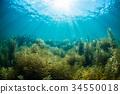 노토 지마 해초 34550018