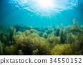 海 大海 海洋 34550152