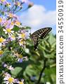 凤蝶 紫菀 花朵 34550919
