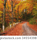 road in the autumn alley 34554398
