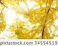 秋天 秋 背景 34554519