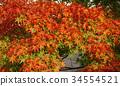 秋天 秋 背景 34554521