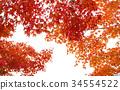 秋天 秋 背景 34554522