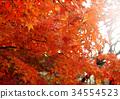 秋天 秋 背景 34554523