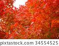 秋天 秋 背景 34554525