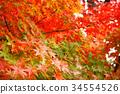 秋天 秋 背景 34554526