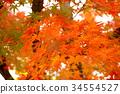 秋天 秋 背景 34554527