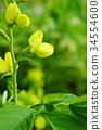 꽃, 플라워, 식물 34554600