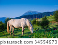 Horse pasture in summer 34554973