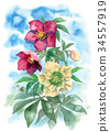 수채화로 그린 크리스마스 로즈 34557919