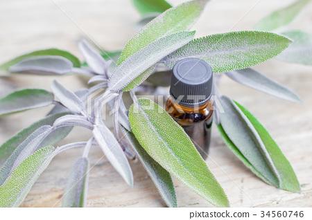 Essential oil sage towel spa Medical Herb  34560746