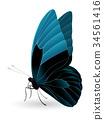蝴蝶 白色 背景 34561416