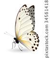 蝴蝶 白色 背景 34561418