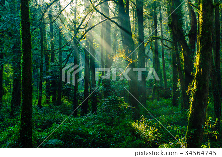 sun beams in the forest in ali mountain 34564745