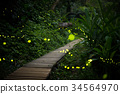 fireflies in the bush at night in taiwan 34564970