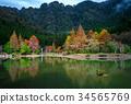 森林 樹林 台灣 34565769