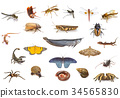 Set of animals on white background 34565830