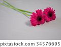 잎, 실내, 배경 34576695