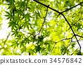 푸른, 녹색, 잎 34576842