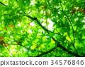 푸른, 녹색, 잎 34576846