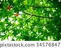 푸른, 녹색, 잎 34576847