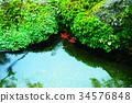푸른, 녹색, 잎 34576848