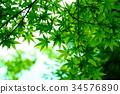 푸른, 녹색, 가을 34576890