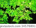 푸른, 녹색, 가을 34576891