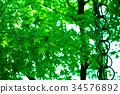 푸른, 녹색, 가을 34576892