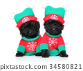 Poodle puppies in Santa clothing 34580821