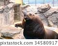 海獅 34580917