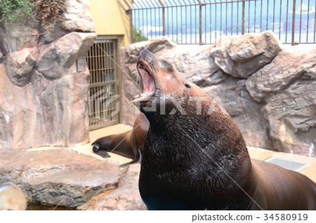 Aquarium 34580919