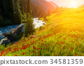 mountain, sunset, flower 34581359