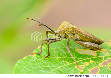 Insect on the leaf 34583371