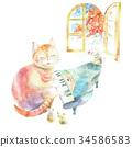 鋼琴 貓 貓咪 34586583