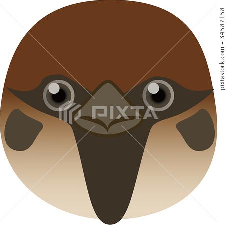 Sparrow 34587158