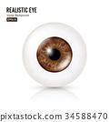 Realistic Detailed Human Eyeball. Vector 34588470