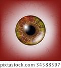eye, diseases, vector 34588597