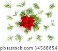Christmas flower poinsettia fhuja branches floral 34588654