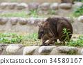 동물, 포유류, 포유동물 34589167