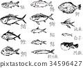 Assorted fish brush illustrations 34596427