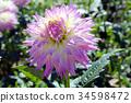식물, 꽃, 플라워 34598472