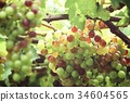 Grapes in vineyard 34604565