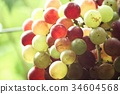 Grapes in vineyard 34604568