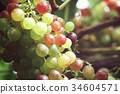 Grapes in vineyard 34604571