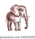 Hand drawn elephant. 34605608
