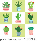Cactus and succulent plants in pots. Illustration 34609939