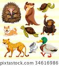 wild animals on yellow background 34616986